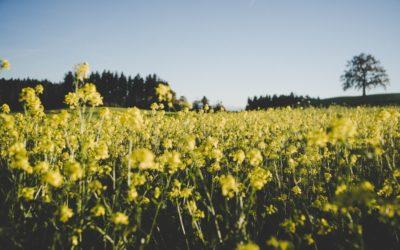 Meine-Blumenwiese ist online