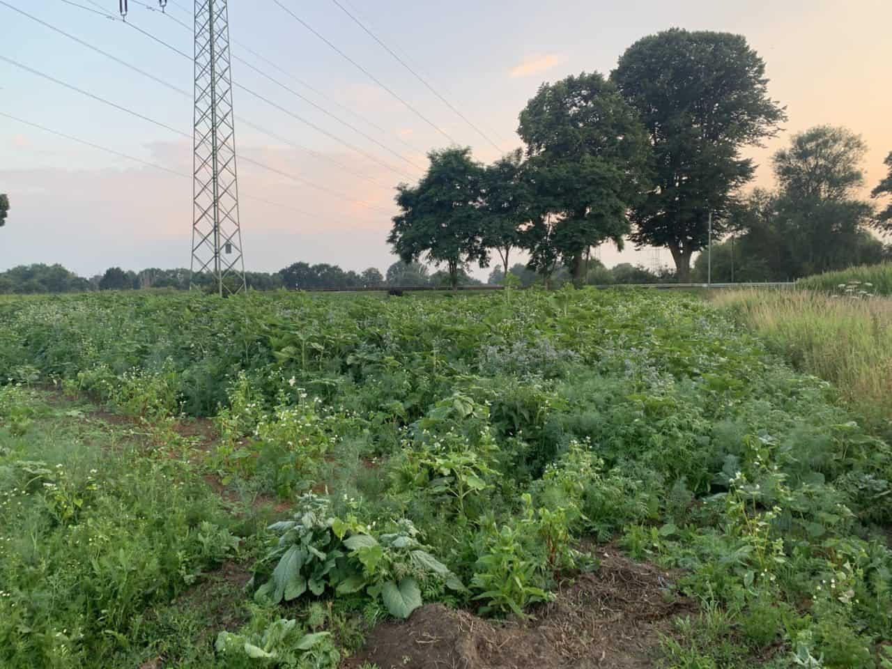 Zwei unserer Blumenwiesen jetzt Biowiesen 1